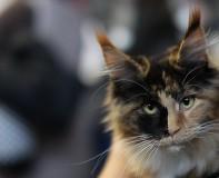 cat_IMG_1024