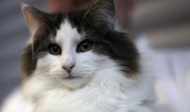 cat_IMG_1028