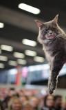 cat_IMG_1046