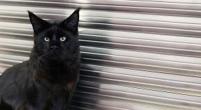 cat_IMG_1048