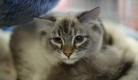cat_IMG_1077