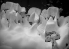 winter_IMG_0517