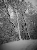 winter_IMG_0525